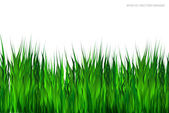 Green grass on white background. — Stock Vector