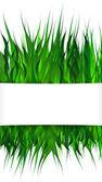 Hierba verde sobre fondo blanco — Vector de stock