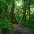 Jungle forest scenic background. Big trees and green plants myst — Stock Photo #12766472