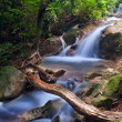 Waterfall in tropical forest. Mountain river, stones with moss a — Stock Photo
