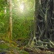 Big old tree trunk with roots in rain forest. Jungle landscape a - Stock Photo