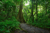 Jungle forest scenic background. Big trees and green plants myst — Stock Photo