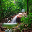 Wild jungle forest and scenery waterfall cascade with tropical p — Stock Photo #12783170