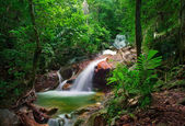 Wild jungle forest and scenery waterfall cascade with tropical p — Stock Photo