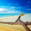 Stock Photo: Scenery tropical landscape at sunny day. Travel creative concept