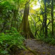 Jungle forest with tropical trees. Adventure background — Stock Photo