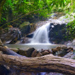 Creek in tropical forest  Beautiful landscape with trees, mossy  — Stok fotoğraf