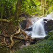 Creek in tropical forest  Beautiful landscape with trees, mossy — Stock Photo