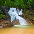 Beautiful landscape in deep forest with mountain creek and water — Stock Photo