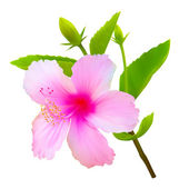Tropische hibiscus bloem. vector plant bloesem — Stockvector