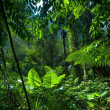 Adventure background. Green jungle forest landscape — Stock Photo