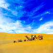 Stock Photo: Camels in desert