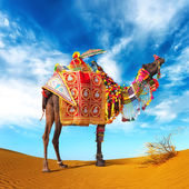Camel in desert. Camel fair festival in India, Rajasthan, Pushka — Stok fotoğraf
