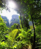 Jungle tropical forest beautiful landscape background — Stock Photo
