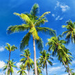 Palm trees natural background. blue sky and tropical plants — Stock Photo #27593097