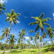 Palm trees natural background. blue sky and tropical plants — Stock Photo #27593207