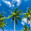 Palm trees natural background. blue sky and tropical plants — Stock Photo #27593211