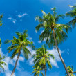 Palm trees natural background. blue sky and tropical plants — Stock Photo #27593585