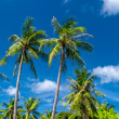 Palm trees natural background. blue sky and tropical plants — Stock Photo
