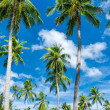 Palm trees natural background. blue sky and tropical plants — Stock Photo #27593671