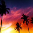 Palm tree sunset on tropical beach — Stock Photo #27837733