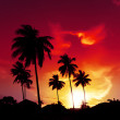 Palm tree sunset on tropical beach — Stock Photo