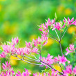 Tree in blossom — Stock Photo