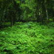 Green nature background. Jungle tropical forest wild landscape — Stock Photo