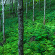 Trees green nature background — Lizenzfreies Foto