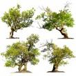 Trees isolated on white background — Stock Photo