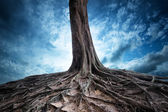 Old tree and roots at night — Stock Photo