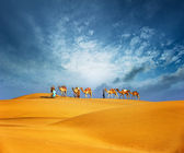 Camels travel through sand of desert dunes — Stock Photo
