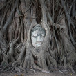 Buddha head in tree roots at Wat Mahathat — Stock Photo