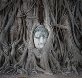 Buddha head in tree roots at Wat Mahathat — Стоковое фото