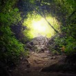 Natural tunnel in tropical jungle forest — Stock Photo #44140521