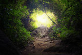 Natural tunnel in tropical jungle forest — Stock Photo