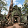 Ta Prohm Khmer   temple in Angkor Wat — Stock Photo #47879069