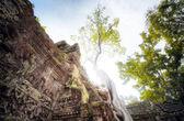 Ta Prom Khmer   temple — Stock Photo
