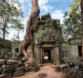 Ta Prohm Khmer   temple in Angkor Wat — Stock Photo