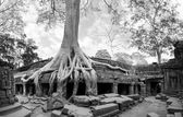 Angkor Wat Cambodia. — Stock Photo