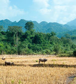 Nature landscape of Laos. — Stockfoto