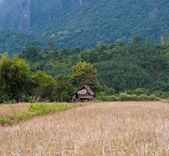 Rice field and green hills. Laos — Stockfoto