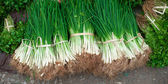 Green onion on market of Laos, Asia — Stockfoto