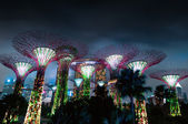 Gardens by the Bay or SuperTree Grove — Stock Photo