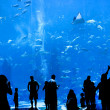 Silhouettes of against a big aquarium — Stock Photo #18985289