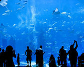 Silhouettes of against a big aquarium — Stok fotoğraf