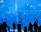 Silhouettes of against a big aquarium — Stock Photo