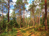 Footpath in the mixed wood, Russia — Stock Photo