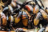 Böcek böcek yığın — Stok fotoğraf