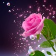 Rose, star and bubbles — Stock Photo